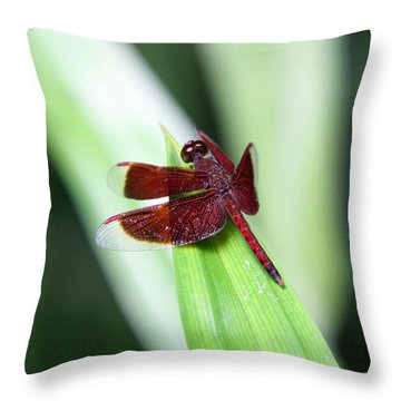 Throw Pillow featuring the photograph Red Dragon by Shoal Hollingsworth