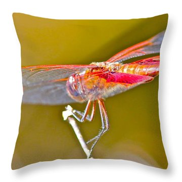 Red Dragonfly Throw Pillow by Cyril Maza