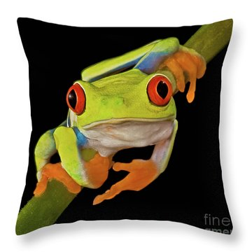 Red Eye Tree Frog Throw Pillow by Susan Candelario