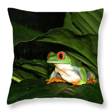 Red Eyed Green Tree Frog Throw Pillow by MTBobbins Photography