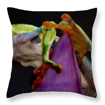 Red Eyed Tree Frog Throw Pillow by Bob Christopher