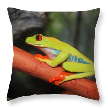 Red Eyed Tree Frog Throw Pillow by Cathy  Beharriell