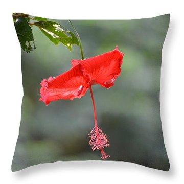 Red Flower St. John's Throw Pillow