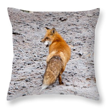 Red Fox Egg Thief Throw Pillow