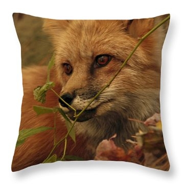 Red Fox In Autumn Leaves Stalking Prey Throw Pillow by Inspired Nature Photography Fine Art Photography