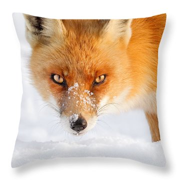 Red Fox In The Snow Throw Pillow by Roeselien Raimond