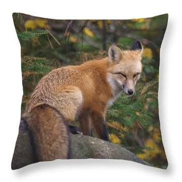 Throw Pillow featuring the photograph Red Fox by James Peterson