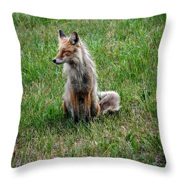 Red Fox Portrait Throw Pillow by Robert Bales
