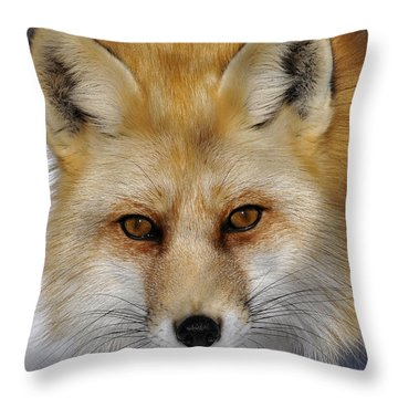Red Fox Portrait Throw Pillow