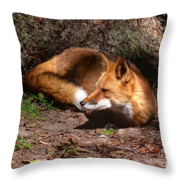 Red Fox Resting Throw Pillow