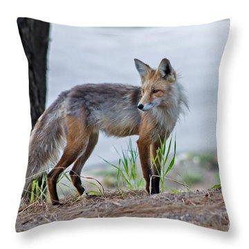 Red Fox Throw Pillow by Robert Bales