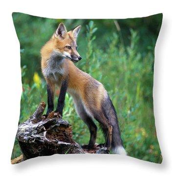 Red Fox Vulpes Vulpes Throw Pillow