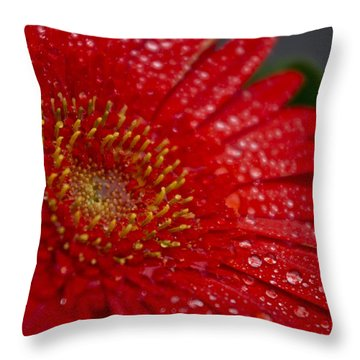 Red Gerber In The Rain Throw Pillow