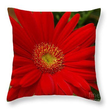 Red Gerbera Daisy Throw Pillow by James C Thomas