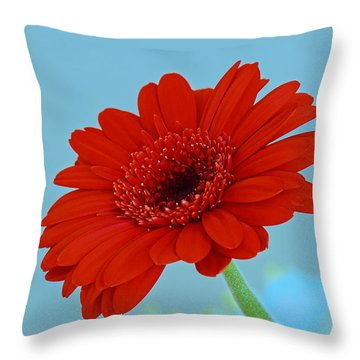 Red Gerbera Daisy Throw Pillow by Scott Carruthers