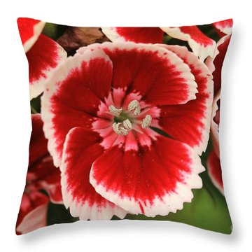 Red Glory All Profits Go To Hospice Of The Calumet Area Throw Pillow