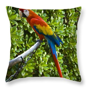 Red-green Macaw Throw Pillow