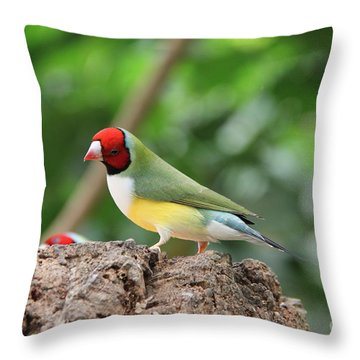 Red Headed Gouldian Finch Throw Pillow