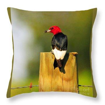 Throw Pillow featuring the photograph Red-headed Woodpecker by Olivia Hardwicke
