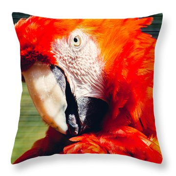 Red Macaw Closeup Throw Pillow by Pati Photography