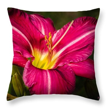 Red Magic Daylily Throw Pillow by Bob Orsillo