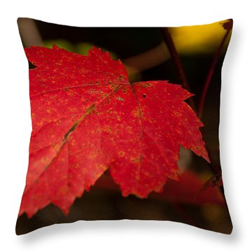 Red Maple Leaf In Fall Throw Pillow