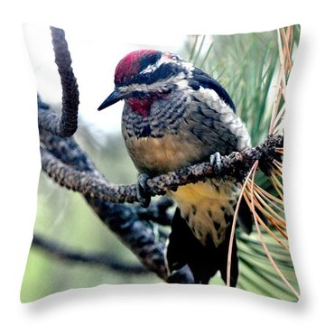 Red-naped Sapsucker On Pine Tree Throw Pillow