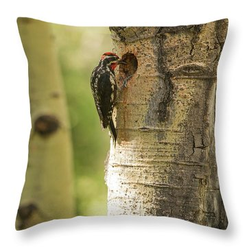 Sapsucker Throw Pillows