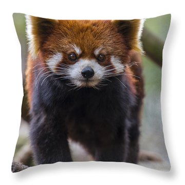 Red Panda 3 Throw Pillow