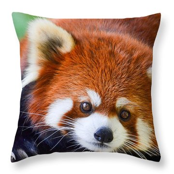 Red Panda Throw Pillow by Michael Hubley