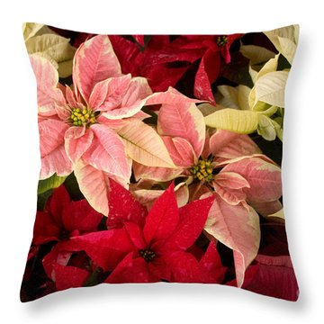 Throw Pillow featuring the photograph Red Pink And White Poinsettias by Chris Scroggins