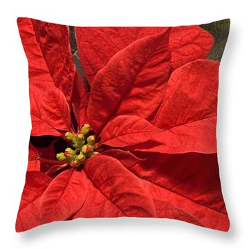Red Poinsettia Plant For Christmas Throw Pillow