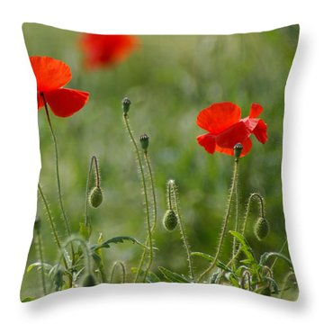 Red Poppies 2 Throw Pillow by Carol Lynch