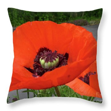 Red Poppy Throw Pillow by Barbara Griffin