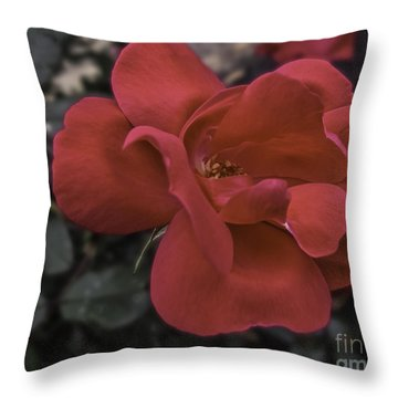 Throw Pillow featuring the photograph Red Red Rose by Arlene Carmel