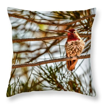 Red Rock Country Hummingbird Throw Pillow by Bob and Nadine Johnston