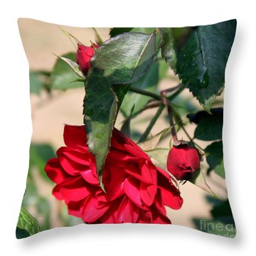 Red Rose 2 Throw Pillow by Erica Hanel