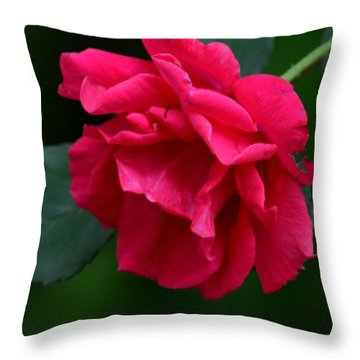 Red Rose 2013 Throw Pillow by Maria Urso