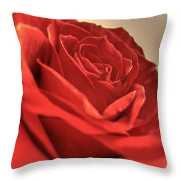 Red Rose Closeup Throw Pillow