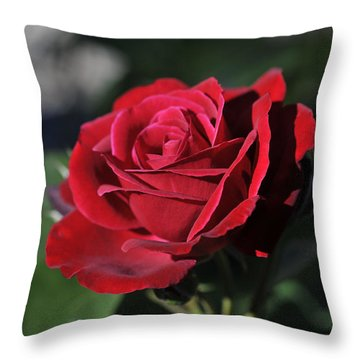 Red Rose Dark Throw Pillow