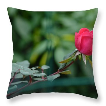 Throw Pillow featuring the photograph Red Rose I by Lisa Phillips