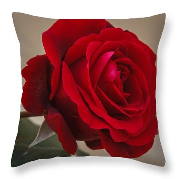 Red Rose Throw Pillow by Jane Luxton