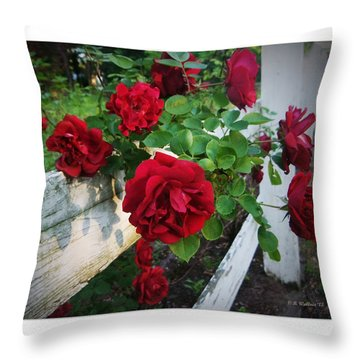 Red Roses - White Fence Throw Pillow by Brian Wallace
