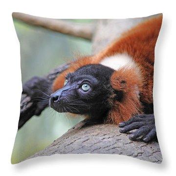 Red-ruffed Lemur Throw Pillow by Karol Livote