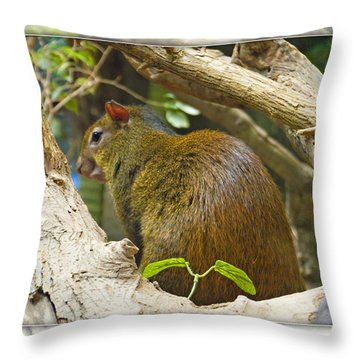 Red-rumped Agouti Throw Pillow