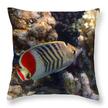 Red Sea Beauty 2 Throw Pillow