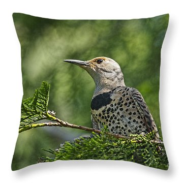 Red Shafted Northern Flicker Female Throw Pillow