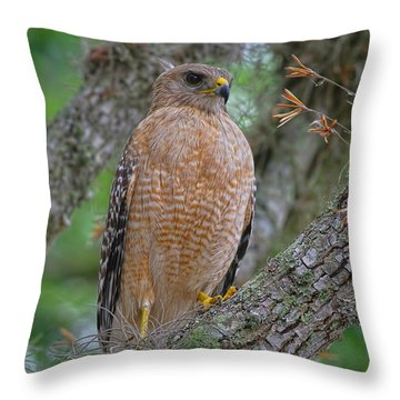 Red Shoulder Series 1 Throw Pillow by Deborah Benoit