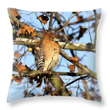 Red-shouldered Hawk - Img_7943 Throw Pillow