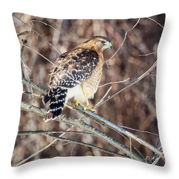 Red Shouldered Hawk Rear View Throw Pillow